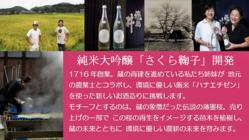 創業300年丹生酒造。新商品「さくら鞠子」で地域への恩返しを