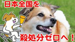 日本全国を殺処分ゼロへ!皆で考える前向きな映画を作りたい!