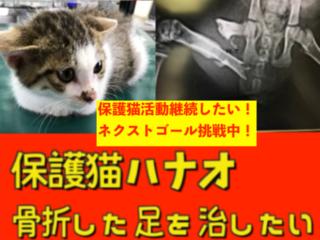 ネクストゴール:保護猫のハナオを手術して幸せ家族に繋げたい!