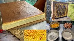 地域に養蜂家を増やしたい!日本蜜蜂のハチミツで芳醇なカステラを作る