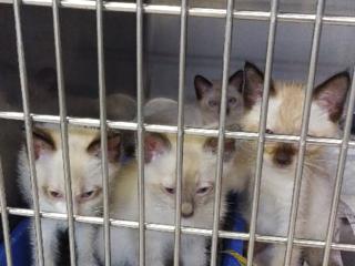 ※SOS 生後1週間~1か月迄の仔猫6匹、医療費援助のお願い