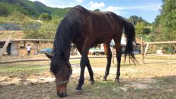 和歌山県田辺市に、引退馬が安心のセカンドライフが送れる場所を