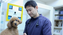 犬のワクチン接種にまつわる疑問を解消!!