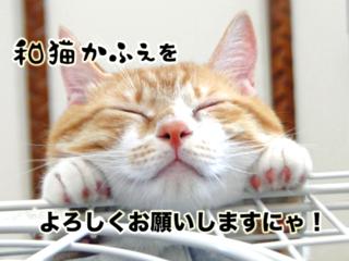 猫の幸せが一番大事。保護猫カフェ☆和猫かふぇ改装プロジェクト