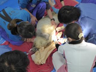 希少な動物たちを救うため最高のどうぶつ医療チームを作りたい