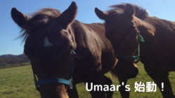 【Umaar'sの挑戦】新ひだか町で引退馬も地域も幸せにしたい!