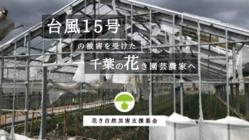 台風15号被害を受けた花き園芸農家へ 再建支援募金プロジェクト