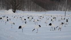 """北海道の希少な野生動植物を""""絶滅の危機""""から守りたい。"""