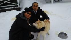 北海道安平町で冬の魅力のアクティビティ作り 犬ぞり体験!