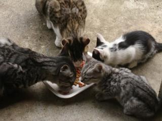 猫ちゃんの避妊手術費用を助けてください