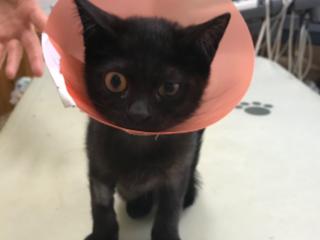 片足を失くした保護猫を助けたい!