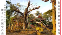 台風15号で被災した「飯香岡八幡宮」の鎮守の森に、救いの手を。