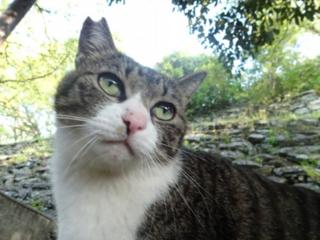 不幸な命を産まさない 不妊手術で救いたい猫の命