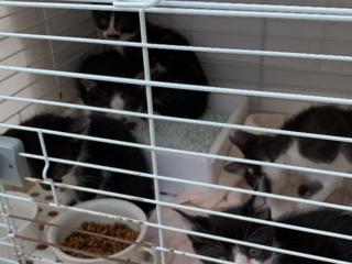 野良猫の保護、治療、手術、譲渡、里親先探し
