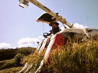 千葉県四街道の荒れたたんぼを再生させ、秋に稲穂を実らせたい!