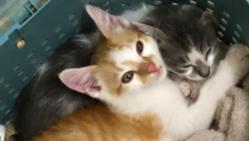 保護猫ちゃんの去勢と、目と頭のしこりを治してあげたい!