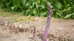 子供たちの健康と未来を守る!有機農産物を多くの方々に届けたい