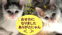 飢え病気、事故虐待から外猫を守る!見守り巡回を助けて下さい。