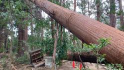 台風15号で被災した「鶴峯八幡宮」。建築神のお宮再建にお力を!