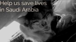過酷な環境で暮らす、サウジアラビアの猫達を助けたい!