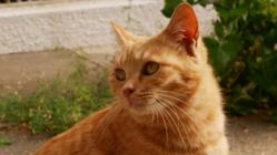 望まれない死を迎える猫を減らしたい!大学ねこにTNRを