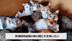 多頭飼育崩壊の家の猫たちを救いたい