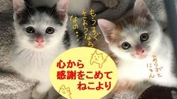 野良猫のためのパトロールを支えて下さいませんか?vol2