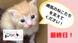 北海道・十勝で、病気を抱える猫たちのいのちをつないでいきたい