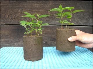 保育苗ブロックを利用し中国とモンゴルの砂漠地再生を目指したい!