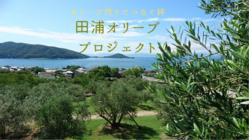 小豆島・田浦に、循環型農業でつくる銀色に輝くオリーブを。