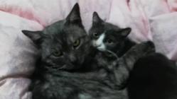 一匹でも多くの命を救いたい【野良猫保護の活動資金の支援】