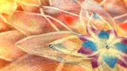 人を突き動かすような景色を。風水×華曼荼羅でルーブル出展へ