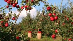 実るまでの物語を共有したい。オーナー制のりんご園を開設