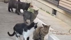 野良猫ちゃん達の保護、里親さん探し。