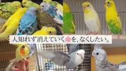 捨てられる命を他人事にしない!藤沢市で鳥の保護活動を続けたい