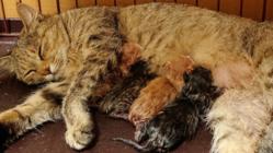 保護猫の妊娠、出産…母猫は猫エイズ。猫親子に適切な医療を。