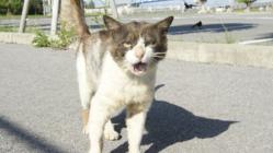 第6弾石垣島の捨てられた猫たちに治療を受けさせたい