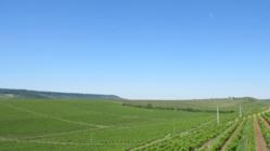 ルーマニアワインおよびワイン用ブドウ品種についての書籍の出版