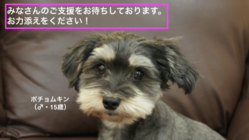 高齢犬に笑顔をもう一度!ポチョムキンの命をつなぎたい。