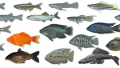 10年ぶりに沖縄島300水系を探る。外来魚図鑑新版へ!
