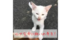 5匹の野良猫を地域猫へ 人に可愛がられて生きる猫を増やしたい