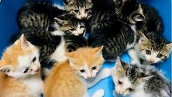 15年目のシャディ保護猫ハウス 1つの命を守るためにこれからも