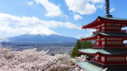 アメリカの小児ガンの少女に富士山と桜を観せたい