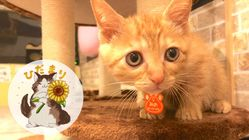保護猫カフェひだまり号存続へ。全ての猫の健康を守りたい。