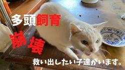 多頭飼育崩壊の現場からSOS。行き場のない猫たちの居場所作りを