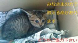 虐待されている捨て猫たちを救いたい