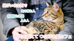 地域の人や里親さんと猫の出会いの場をつくり、活動の継続を!!
