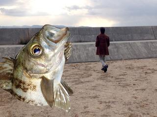 直島に記念撮影したくなるような魚のオブジェを新たに創りたい!
