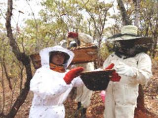 大洪水で壊滅したマラウイの養蜂場再建!巣箱を50個製作したい