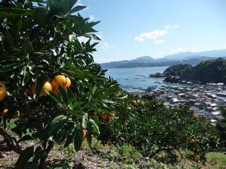 愛媛県五明の元気でおいしい農産物を全国へECサイトで届けたい